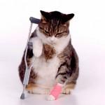 Кошачьи болячки и их симптомы