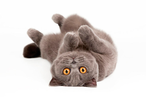 Кошка, о которой заботятся
