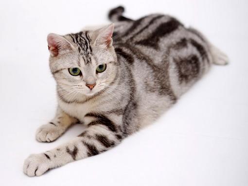 Кот в чистом помещении