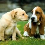 Симптомы и признаки лишая у собаки