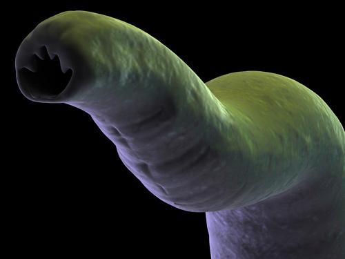 уколы от паразитов для человека