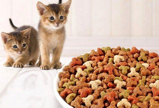 Готовые корма для котят