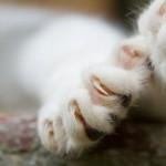 Подстригаем кошке когти