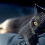 Где приютить кошку на время отпуска