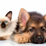 Гамавит для кошек и собак