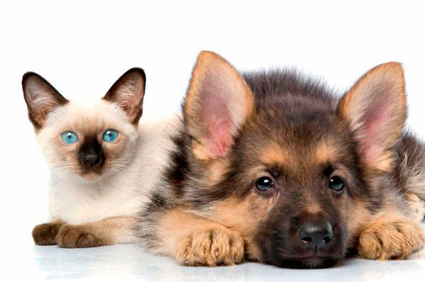 Кот и собака на отдыхе