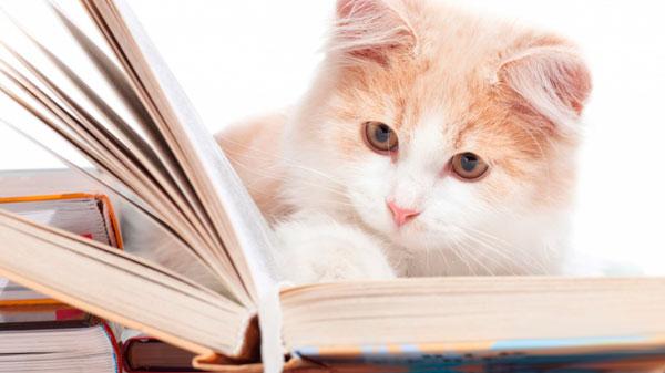 Лечение микоплазмоза у кошек