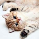 Чем кормить котенка? Три основные схемы, сотни вариантов