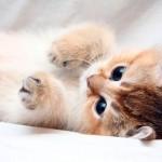Клички кошек: милые, смешные, аристократические, королевские