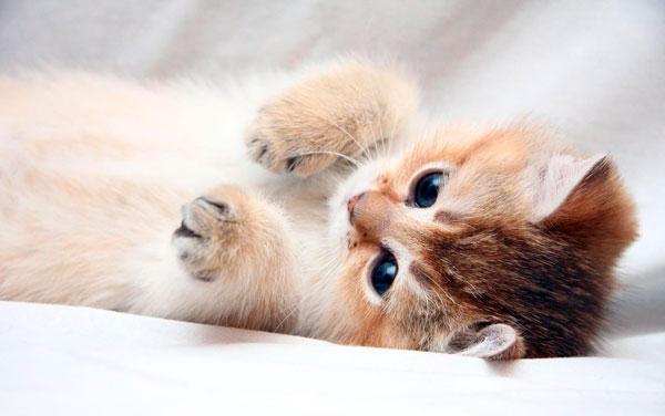 Милый котенок играется