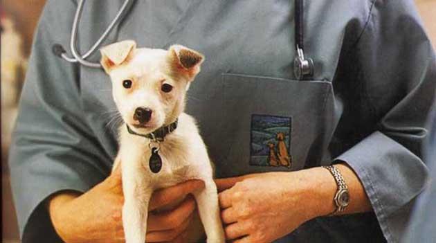 Профилактика микоплазмоза у собак
