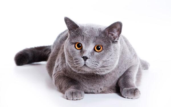 Уверенный кот