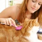 Методы борьбы с кошачьей шерстью