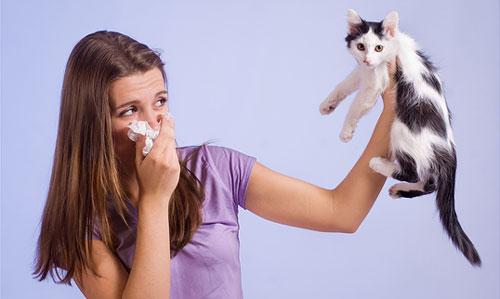 Аллергия на кота