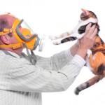 Симптомы и проявления аллергии на кошек