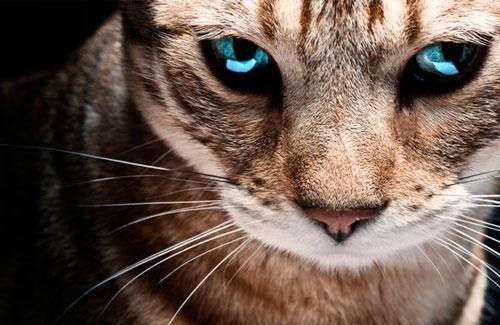 Лечение ОПН у кошки