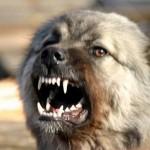 Бешенство у собак: как распознать и можно ли вылечить?