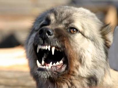 Симптомы бешенства у собаки