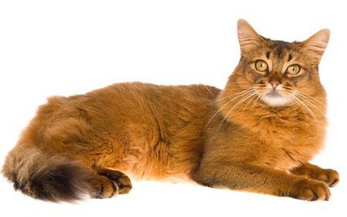 Кошка без глистов