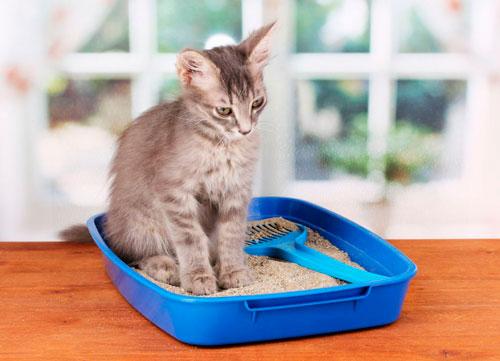 Запор у котов чем лечить