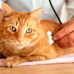 Что делать если у кота или кошки цистит?
