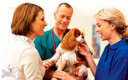 Лечение диареи у ветеринара