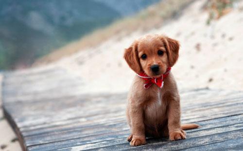 лечение поноса у щенка
