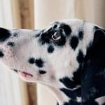 Методы лечения уролитиаза у собак