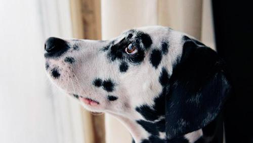 Мочекаменная болезнь у собаки
