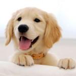 Рекомендации по лечению поноса у щенков