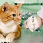 Панлейкопения у кошки: симптомы и методы предотвращения