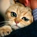 Лептоспироз у кошки: серьезная бактериальная болезнь