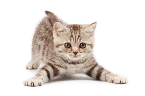 у котенка запор