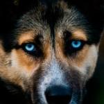 Симптомы, лечение и профилактика чумки у собаки