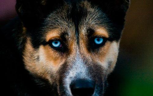 У собаки чумка