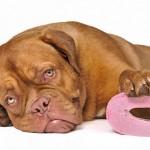 У собаки диарея? Разберем все возможные причины