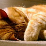 Какая температура тела у кошки считается нормальной