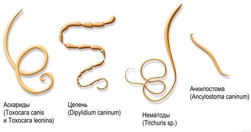 простейшие паразиты в организме человека фильм