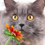Распространенные виды и признаки аллергии у кошек