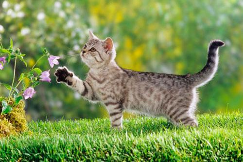 Диагностика аллергии у кошки