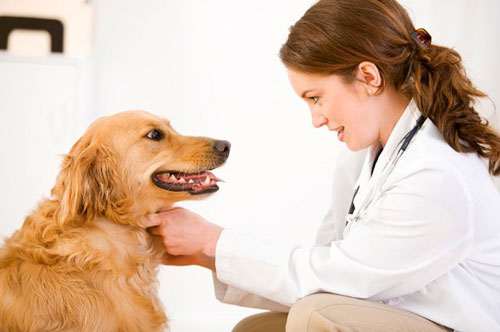 диагностика синдрома Кушинга у собаки
