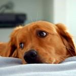 Диагностика и советы по лечению эпилепсии у собаки