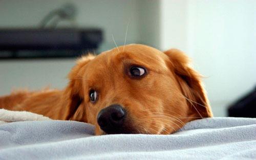 эпилептический приступ у собаки