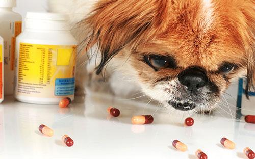лечение эпилепсии у собаки