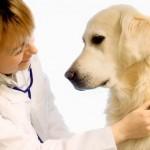 Причины возникновения кашля у собак
