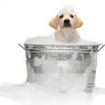 Возникновение перхоти у собаки и способы борьбы с ней