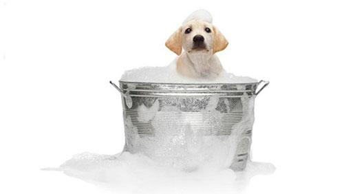 лечение перхоти у собаки