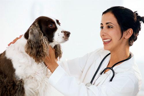 лечение саркоптоза у собак