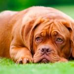 Непроизвольное мочеиспускание у собаки
