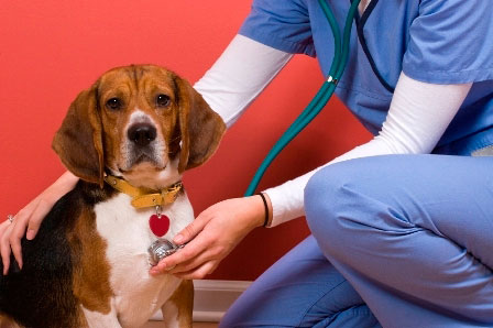 определение причины неприятного запаха у собаки